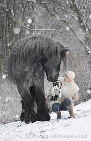 animal-winter-health